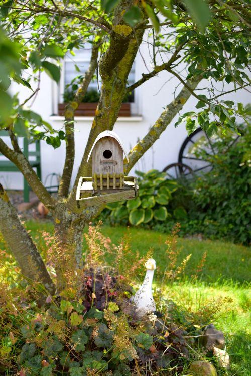 paukščių maitintojas,medis,maitinimas,einflugloch,gamta,priklausyti,namai,gražus,kaimas