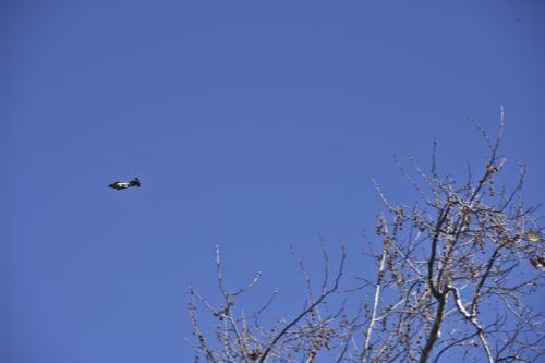 Paukštis,  Raketa,  Skraidantis,  Medis,  Lieknas,  Greitai,  Reaktyvinis,  Paukštis Kaip Raketa