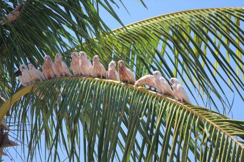paukščiai,saulėtas,atogrąžų,papūgos,palmė