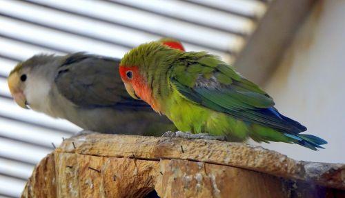 paukščiai,atogrąžų,atogrąžų paukštis,žalias,raudona,rašiklis,egzotinė paukštis,gyvūnai,piko,fauna,paukštis,zoologijos sodas,spalva