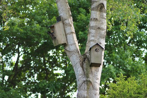 paukščiai, sodo paukščiai, natūralus, turi, vasara, Danija, brangi, Gyvūnijos, jauni paukščiai, Inkilėlis