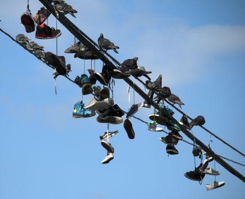 paukštis, paukščiai, laukinė gamta, balandis, balandžiai, tenisas & nbsp, batai & nbsp, viela, Grunge, sportiniai bateliai & nbsp, viela, paukščiai & nbsp, viela, galia & nbsp, linija, telefono & nbsp, laidas, freskomis, miesto, Laisvas, viešasis & nbsp, domenas, paukščiai ir sportiniai aksesuarai ant laido