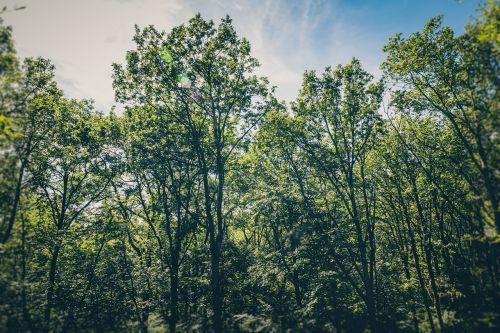 paukščio akis,filialai,spygliuočių,lapuočių,ekologinis sąmoningumas,aplinka,aplinkos sąmoningumas,eglė,miškas,žolė,žalias,žemė,buveinė,kalnas,idiliškas,kraštovaizdis,lapai,lapai,natūrali aplinka,gamta