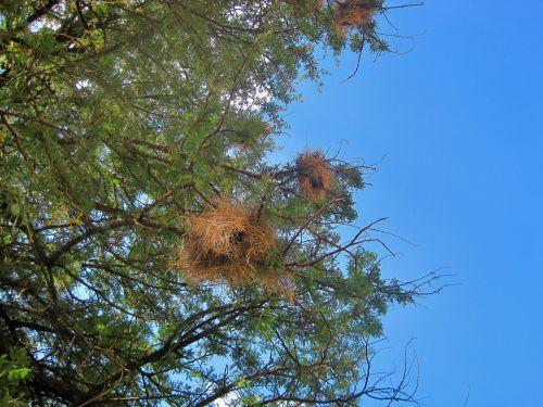 medis, erškėtis, lizdai, netinkamas, neužkimštas, paukščių lizdai medyje