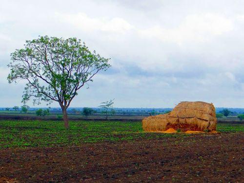 juoda,medvilnė,dirvožemis,kraštovaizdis,šieno kamienas,derlius,ūkis,ūkininkavimas,žemės ūkio paskirties žemė,debesys,laukai,dangus,šienas,žemės ūkio,žemė,Indija