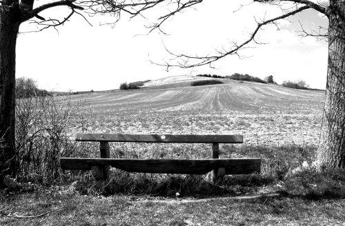 juoda ir balta, bankas, medinis stendas, stendas, gamta, out, spustelėkite, sėdynė, poilsis, mediena, medis, sėdėti, tylus