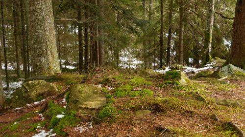 Juodasis miškas,gamta,Ravenos tarpeklis,Vokietija,žygių diena,medžiai