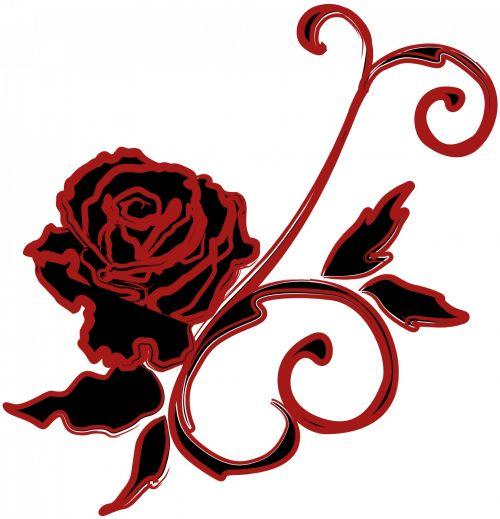 rožė, piešimas, juoda, raudona, izoliuotas, balta, fonas, juoda rožė