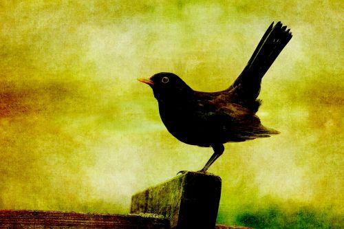 juoda paukštis, paukštis, saulėlydis, vintage, dažymas, menas, Grunge, senas, susikrimtęs, gamta, gyvūnas, lauke, Scrapbooking, Laisvas, viešasis & nbsp, domenas, juodasis paukštis