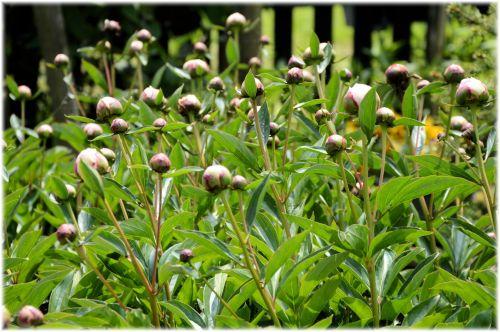 e-kortelė, gėlė, gėlės, žydėti, sodas, žalias, augalas, augalai, gamta, holland, gėlės Holland Gardens 6