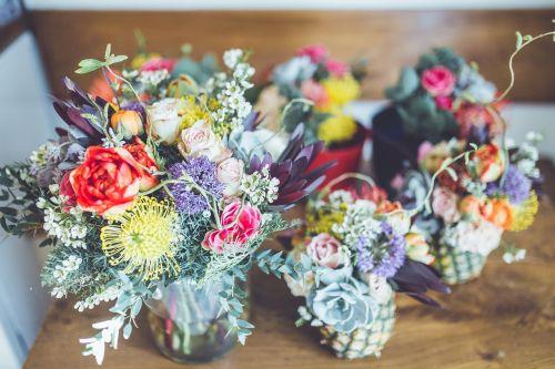 žydėti,žiedas,spalvinga,spalvinga,flora,gėlės,augalai,vazos