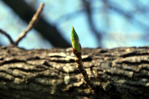 šakelė, žydėti, augti, medis, pavasaris, atgimimas, atnaujinti, žydi šakelė