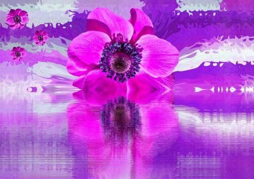 žiedas,žydėti,gėlė,aguonos gėlė,vasara,gamta,augalas,violetinė,mažos gėlės,pavasaris