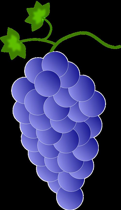 mėlynas,spalva,spalva,valgyti,valgomieji,maistas,vaisiai,Vynuogė,vynuogės,realus,violetinė,nemokama vektorinė grafika