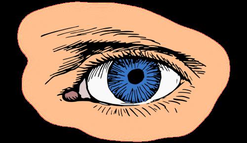 mėlynas,akis,blakstienų,optinis,optinis,organas,regėjimas,nemokama vektorinė grafika