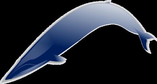 mėlynas,žuvis,maudytis,kreivė,lenkti,pelekai,nemokama vektorinė grafika