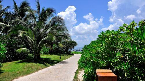 mėlynas dangus,debesis,papludimys,kranto,viešbutis,turizmas,kelionė,palmės,Niekas,saulės šviesa