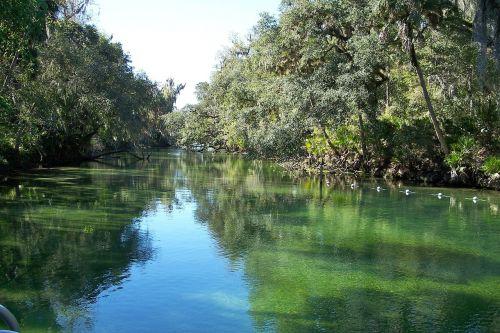 mėlyna spyruoklių upė,florida,upė,gamta,vanduo,apmąstymai