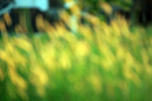 neryški & nbsp, žolė & nbsp, fonas, neryškus, žolė, fonas, geltona, žalias, neryškios žolės fonas