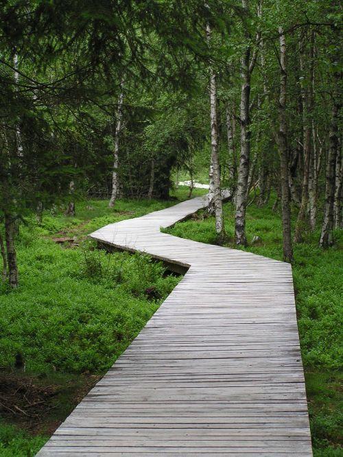 lentynas,medinis takas,miškas,kiauras,pelkės,internetas,gamta,medinis tiltas,toli,gamtos rezervatas,zigzag,pelkių takas,takas,medžiai,kreivė,kreivės