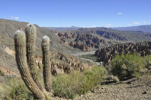 kalnai, Bolivija, smiltainis, spalvos, kaktusas, Bolivija