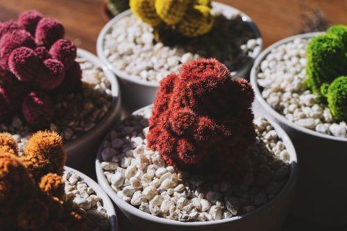 bonsai,botanikos,kaktusas,spalvinga,spalvinga,gėlių vazonai,akmenukai,augalai,akmenys,šešėlis