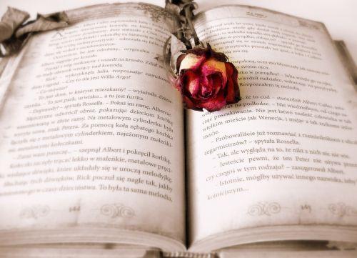 knyga,skaitymas,meilės istorija,istorija,romėnų,romanas,rožė,rožinis,romantiškas
