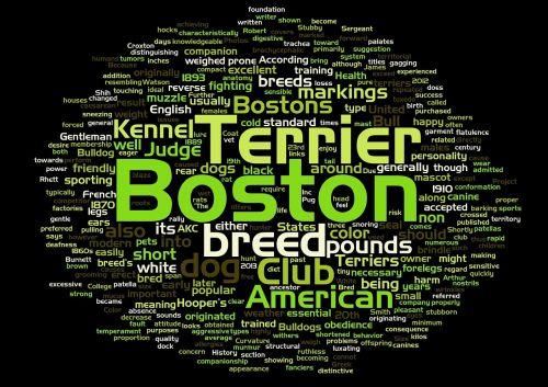 Bostonas,terjeras,šuo,žodis debesis,šunų veislė
