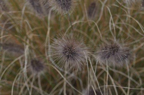 Botanikos, botanikos sodas, botanikos sodas, liguistas, ruduo, nuotaika, floros, augalų, botanika, Sodas, pobūdį, Botanikos, Iš arti, Lengvai, žolės