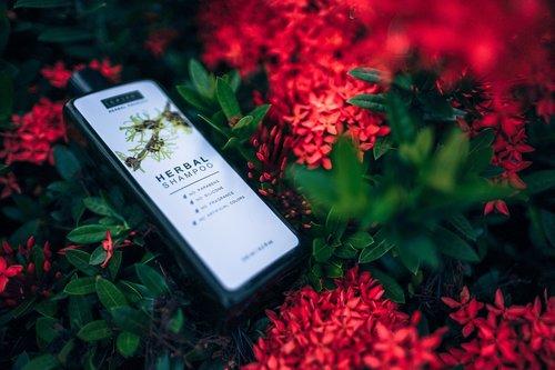 Botanikos, aromatinis, Grožio, butelis, prekės, priežiūra, gėlės, žalias, Plaukų, žolelių, lapai, natūralus, nepritaria, produktas, raudona, šampūnas, minkštas, skaidrus