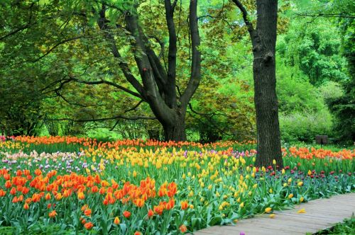 sodai, medžiai, didelis, gėlės, tulpės, oranžinė, geltona, rožinis, pomidoras, žalias, botanikos sodai, Maskva