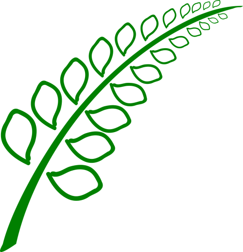 botanika,augalas,lapai,žalias,aplinka,sodininkystė,sodininkystė,Žemdirbystė,nemokama vektorinė grafika