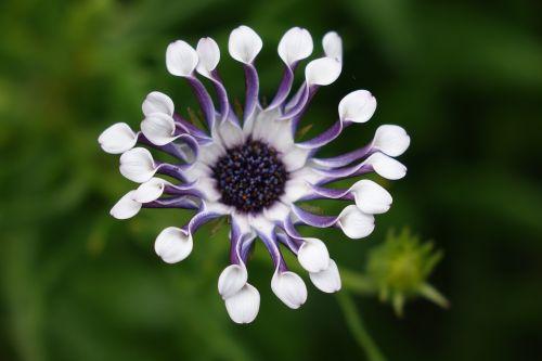 botanika,gėlės