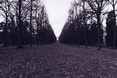 boulevard,alėja,medžiai,juoda ir balta