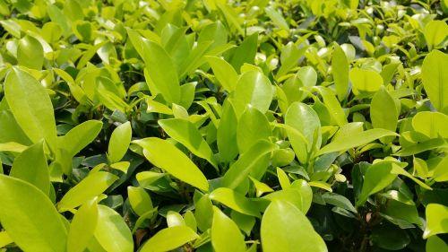 riba,tamsiai žalia,darbalaukio tapetai,eksterjeras,tvora,sodas,žalias,lapai,šviesiai žalia,natūralus,gamtos tapetai,augalai,tapetai