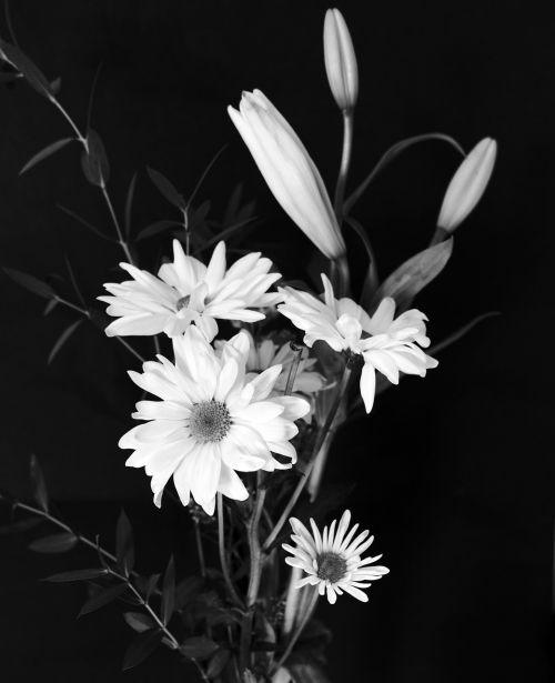 puokštė,gėlė,gėlių puokštė,gėlių puokštė,išdėstymas,gėlių,gamta,augalas,krūva,balta,žiedas,žiedlapis,pavasaris,žydėti,žydi,gėlių puokštė,elegancija,šviežias,juoda ir balta,fotografija