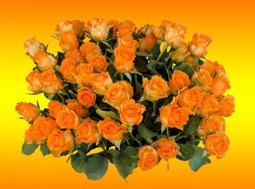 puokštė,gimtadienio puokštė,gėlės,rožė,strausas,gimtadienis,žiedas,žydėti,vestuvių puokštė,rožių puokštė,oranžinės rožės,meilė,pasveikinimas,gėlių sveikinimas
