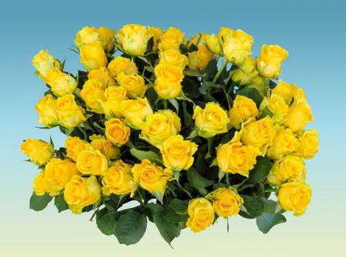puokštė,gimtadienio puokštė,gėlės,rožė,strausas,gimtadienis,žiedas,žydėti,vestuvių puokštė,rožių puokštė,geltonos rožės,meilė,pasveikinimas,gėlių sveikinimas