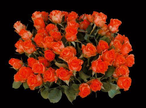 puokštė,gimtadienio puokštė,gėlės,rožė,strausas,gimtadienis,žiedas,žydėti,vestuvių puokštė,rožių puokštė,raudonos rožės,meilė,pasveikinimas,gėlių sveikinimas