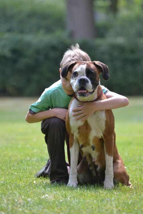 boksininkas,vokiečių boksininkas,šuo išvaizdą,naminis gyvūnėlis,šuo,bokserio šuo,vaikas ir šuo,pasinerti,šuo ir vaikas,vaikas,vaikai,Draugystė,Gerai,lojalumas