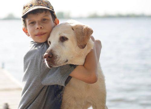 berniukas,šuo,Draugystė,komplikacija,labradoras,naminis gyvūnėlis,vaikas