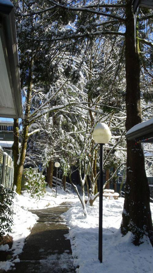 filialai, žiema, vaizdas, padengti, sniegas, ledas, šaltas, medžiai, filialai