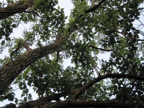 medis, filialai, lapai, lapija, žalias, filialai ir žalumynai