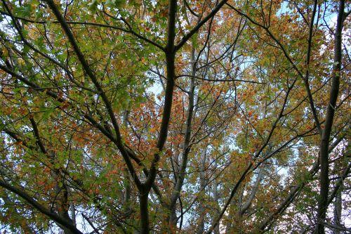 medžiai, filialai, lapai, žalias, gelta, ruduo, filialai su besikeičiančiais lapais