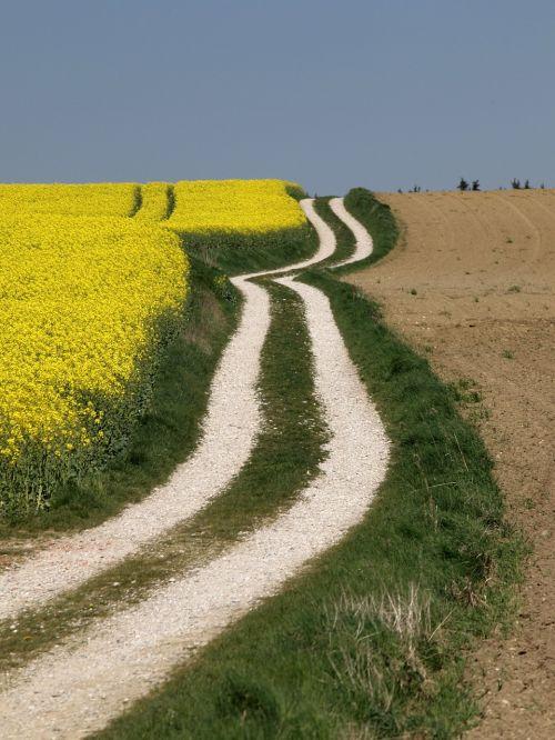 brassica napus laukas,rapsfeld,Žemdirbystė,bioenergija,augalas,gamta,rapsų aliejus,natūralus,takas kraštovaizdis,peizažas,Vokietija,bavarija