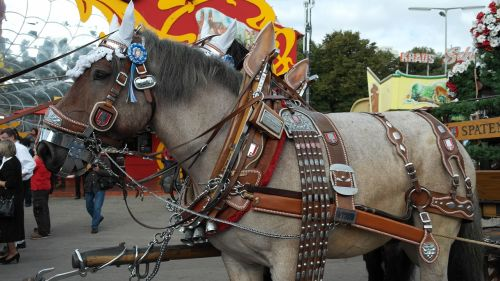 alaus daryklos arklys,kaltblut,arklys,velniškas arklys,darbinis arklys,komanda,spalvingas,papuoštas,gyvuliai,stiprus,jaukus,oktoberfest,bavarija,Munich,valstybinis kapitalas,gaul,Brauereigaulis