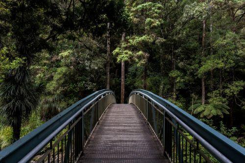 tiltas,turėklai,miškas,struktūra,metalas,architektūra,vaikščioti,plienas,lauke,Kelionės tikslas,tikslas,tikslas,progresas