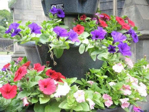 gėlės, vasara, parkas, uk & nbsp, vasara, įvairūs, grožis, ryškios gėlės