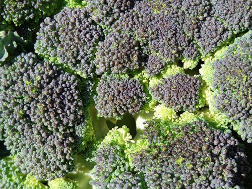 Brokoliai,daržovės,maistas,valgymas,augalas,Sveikas maistas,sveikai maitintis,sveikas,šviežias,natūralus maistas,žalias,auginimas,Žemdirbystė,vitaminai,sveikata,gamta,natūralus,žalias maistas,daržovių,sveika mityba,vienas daržovių,valgyti