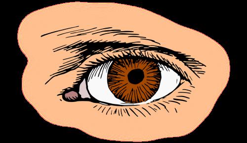 ruda,akis,blakstienų,optinis,optinis,organas,regėjimas,nemokama vektorinė grafika